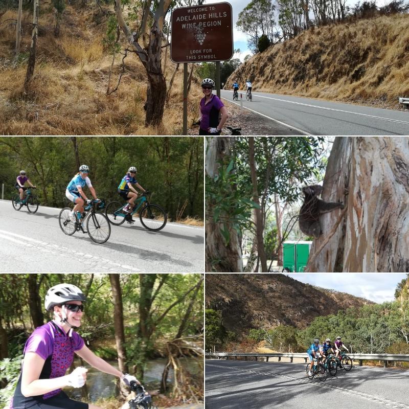Adelaide Bike Trip Gorge Rd Cudlee Creek Australian Wildlife Koalas Kangaroos